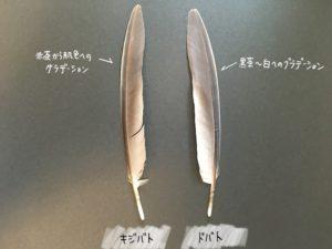 キジバトとドバトの羽の見分け