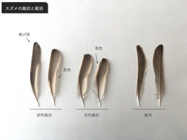 スズメの尾羽と風切