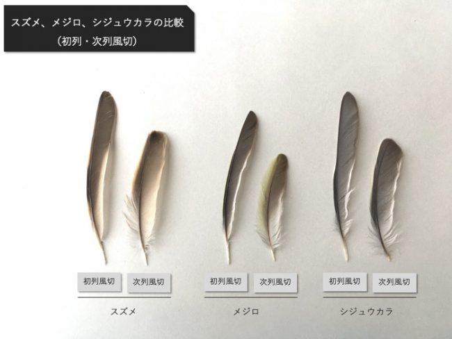 スズメ_メジロ_シジュウカラの風切比較
