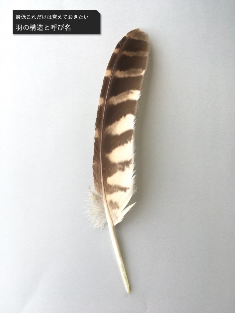 フクロウの羽