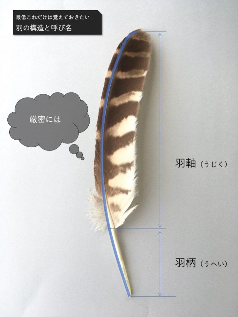 羽弁と羽柄