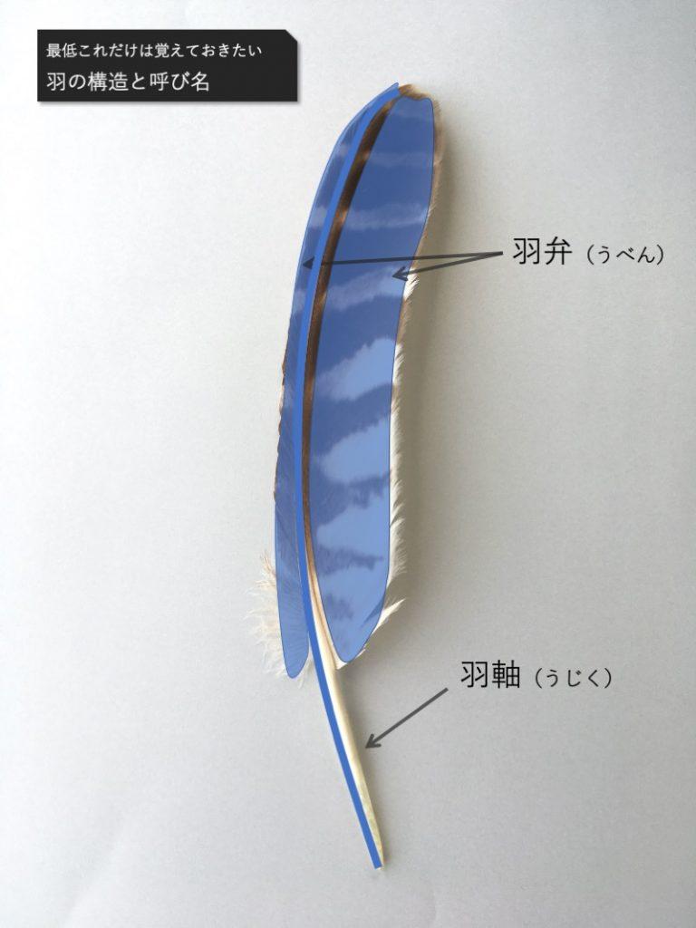 羽軸と羽弁