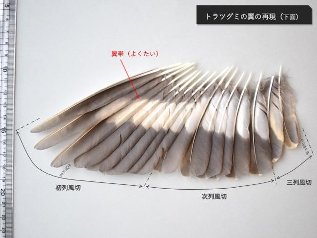 トラツグミの翼再現_下面