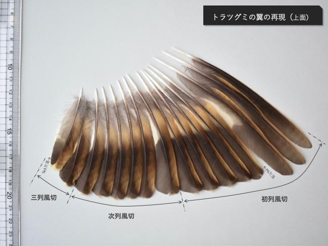 トラツグミの翼再現_上面