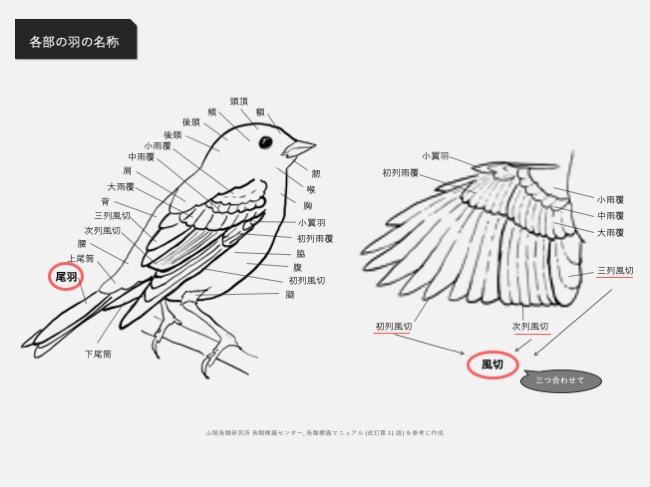鳥体各部の名称