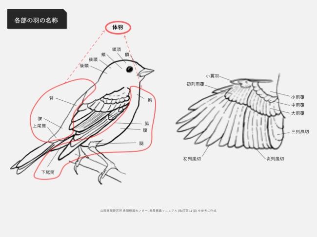 鳥体各部の名称_体羽