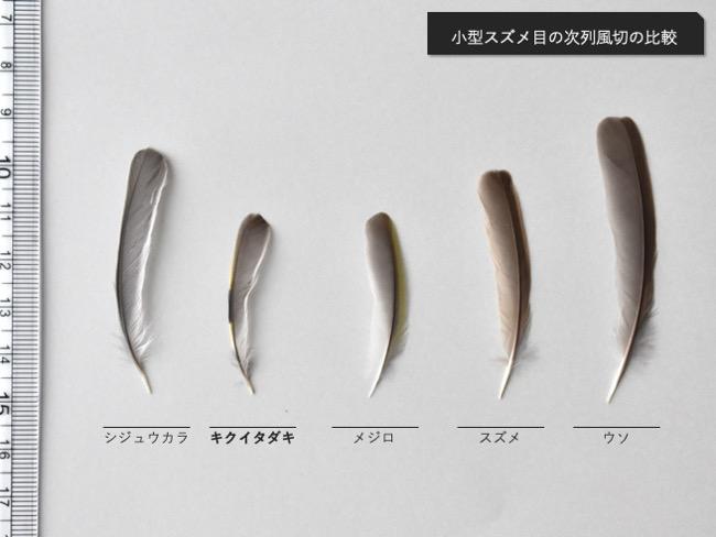 次列風切の比較(シジュウカラ、キクイタダキ、メジロ、スズメ、ウソ)