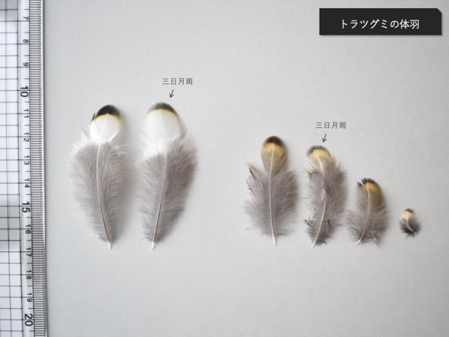 トラツグミの体羽