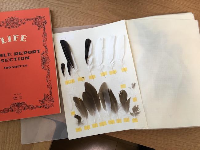 LIFEのレポート用紙に貼ったケリの羽
